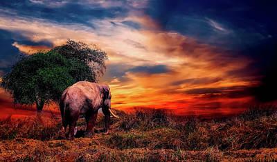 Photograph - Elephant At Sunset by Pixabay