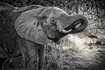 Photograph - Elephant Bathing by Fran Gallogly