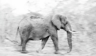 Elephant Blurr Art Print
