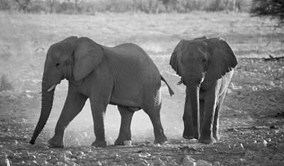 Elephant Buddies - Black And White Art Print by Nancy D Hall