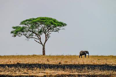 Photograph - Elephant By Acacia Tree by Marilyn Burton