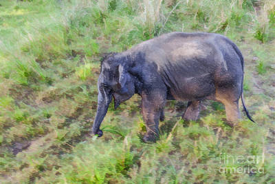 Digital Art - Elephant Calf Pulling Grass by Liz Leyden
