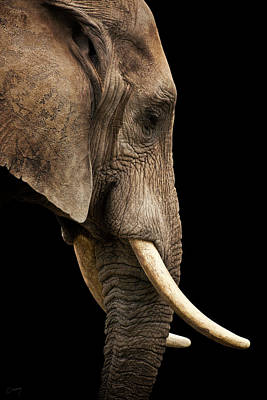 Just Desserts - Elephant on Black by Christina Conway
