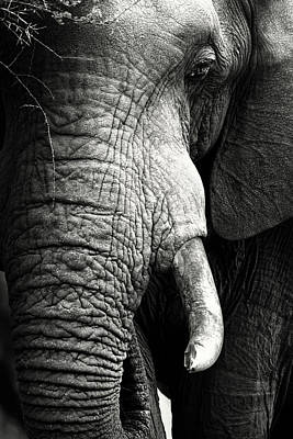 Animals Royalty-Free and Rights-Managed Images - Elephant close-up portrait by Johan Swanepoel
