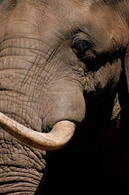 Elephant Close Up Art Print by Tess Haun
