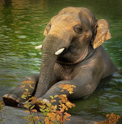 Photograph - Elephant Cooler by Jean Noren