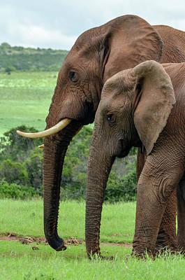 Elephant Couple Profile Art Print