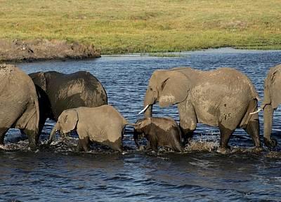 Elephant Crossing Art Print