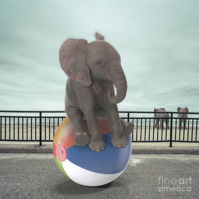 Photograph - Elephant Day At The Beach Surreal by Edward Fielding