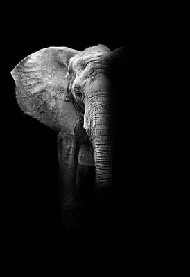 Elephant Art Print by Deborah Penland