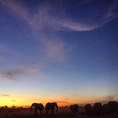 Photograph - Elephant Dusk by Alistair Lyne
