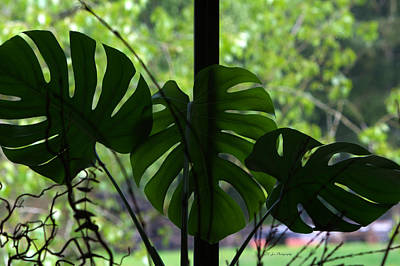 Photograph - Elephant Ear Foliage by Jeanette C Landstrom