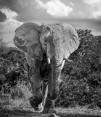 Photograph - Elephant Encounter by Bob VonDrachek