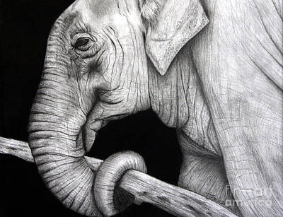 Elephant Pencil Drawing Drawing - Elephant by Erika Farkas