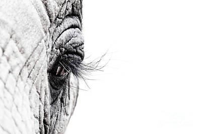 Elephant Eye Art Print by Jane Rix
