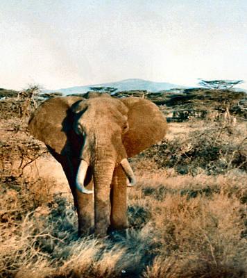Photograph - Elephant Eyes by Lin Grosvenor