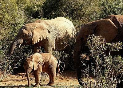 Photograph - Elephant Family by Jennifer Wheatley Wolf