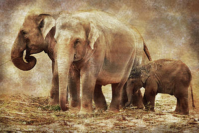 Animals Royalty-Free and Rights-Managed Images - Elephant family by Mihaela Pater