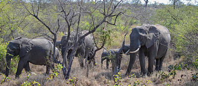 Photograph - Elephant Family On The Move by Jeff at JSJ Photography