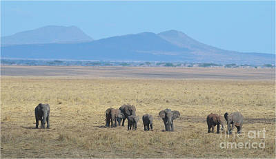 Photograph - Elephant Family Scenic Backdrop Tanzania by Tom Wurl