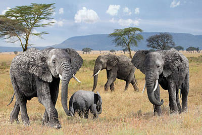 Photograph - Elephant Family Wild And Free by Gill Billington