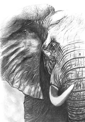 Elephant Pencil Drawing Drawing - Elephant For Alabama  by Hae Kim