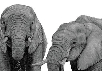 Drawing - Elephant Friends by Claire Fagan