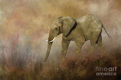Photograph - Elephant Grazing by Myrna Bradshaw
