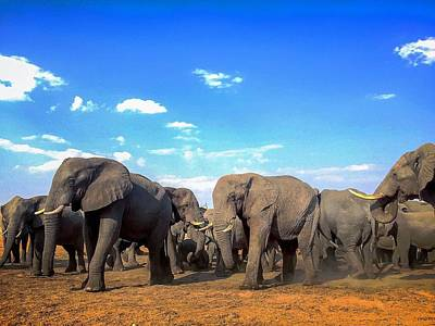 Photograph - Elephant Herd by Alistair Lyne