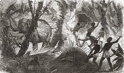 Native Drawing - Elephant Hunting In Africa by Vintage Design Pics