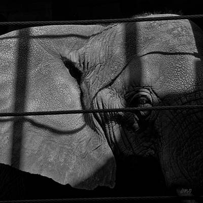 Photograph - Elephant I Bw Sq by David Gordon