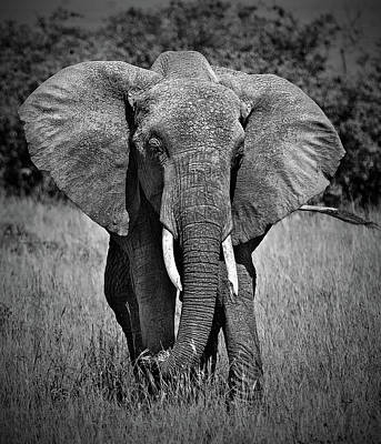 Art Print featuring the photograph Elephant In Amboseli by Antonio Jorge Nunes