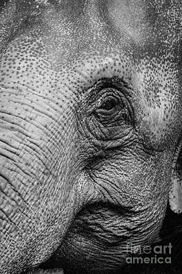 Photograph - Elephant In Black And White by Giovanni Malfitano