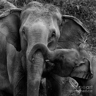 Elephant In Black And White Original by Pojcheewin Yaprasert