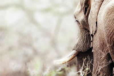 Photograph - Elephant In Dreamy Woods by Susan Schmitz