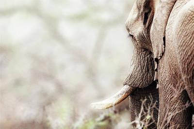 Elephant In Dreamy Woods Art Print