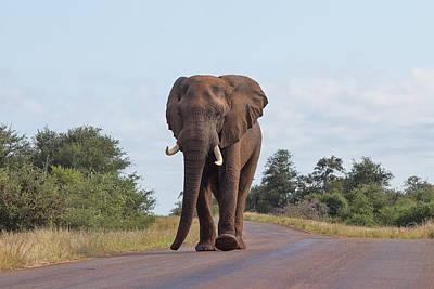 Elephant In Kruger Art Print