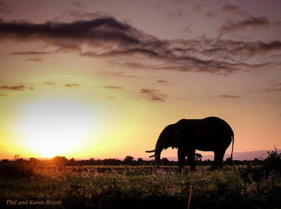 Photograph - Elephant In Olpejeta by Philip Rispin