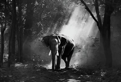Sun Rays Mixed Media - Elephant In The Heat Of The Sun Black And White by Georgiana Romanovna