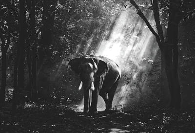 Photograph - Elephant In The Mist by Pixabay