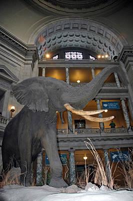 Photograph - Elephant In The Room by LeeAnn McLaneGoetz McLaneGoetzStudioLLCcom