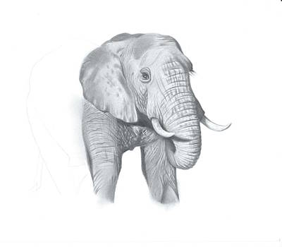 Elephant Pencil Drawing Drawing - Elephant Interrupted by Heidi Farrar