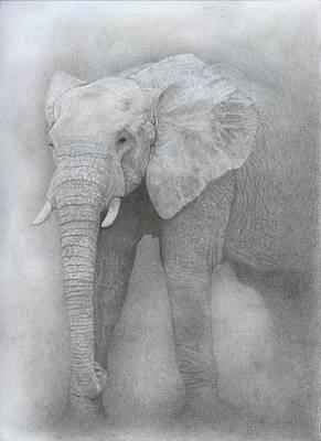 Elephant Pencil Drawing Drawing - Elephant by Jennifer Nilsson