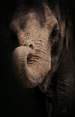 Photograph - Elephant by Jim Vance