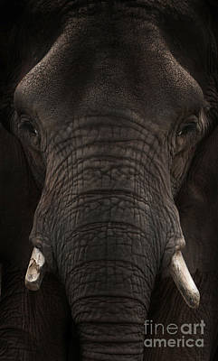 Photograph - Elephant by Lynn Jackson
