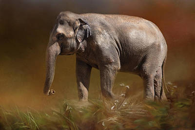 Photograph - Elephant by Michele Wright