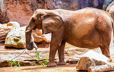 Photograph - Elephant Mixed -wildlife by Adrian DeLeon