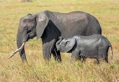 Photograph - Elephant Mother And Calf 1, Kenya by Mark Coran