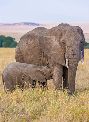 Photograph - Elephant- Mother And Calf 2 by Mark Coran
