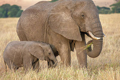 Photograph - Elephant Mother And Calf 4 by Mark Coran